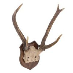Small Antlers Wall Plaque